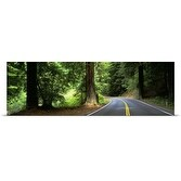 Poster Print entitled Road Redwoods Mendocino County CA
