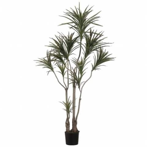 Allstate Floral LPD516-GR-BU 6 ft. Outdoor Dracaena Marginata Tree with 418 Lvs. in Plastic Pot Green Burgundy - Pack of 2