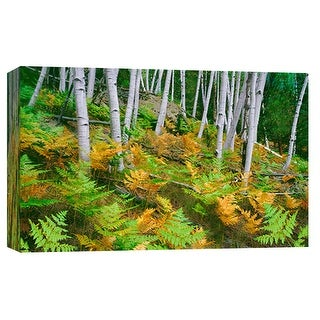 """PTM Images 9-101946  PTM Canvas Collection 8"""" x 10"""" - """"North Rim Aspens"""" Giclee Forests Art Print on Canvas"""