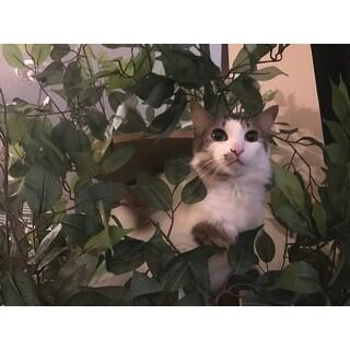 On2Pets Luxury Large Square Cat Tree