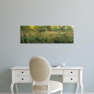 Easy Art Prints Panoramic Images's 'Tall grass in a forest, Pokagon State Park, Indiana, USA' Premium Canvas Art
