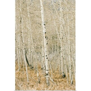 """Aspen trees, Sugarhouse Park, Salt Lake City, Utah"" Poster Print"
