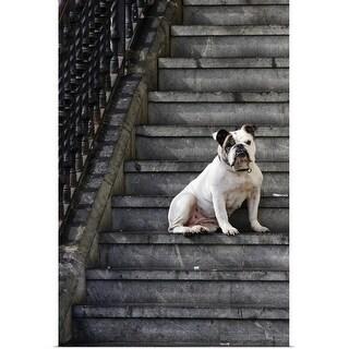 """A bulldog sits on steps in Mundaka, Spain"" Poster Print"