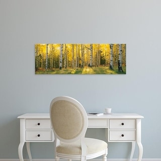 Easy Art Prints Panoramic Images's 'Aspen trees in a forest, Coconino National Forest, Arizona, USA' Canvas Art
