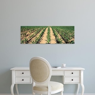 Easy Art Prints Panoramic Images's 'View of corn saplings in a field' Premium Canvas Art