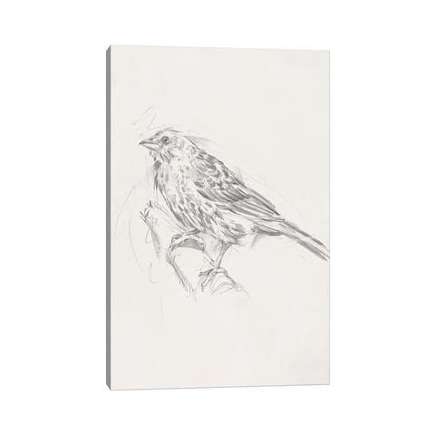 "iCanvas ""Avian Study III"" by Ethan Harper Canvas Print"