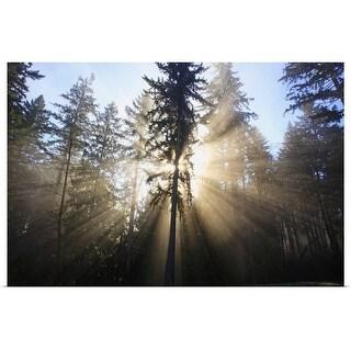 """sun shining through morning fog and trees"" Poster Print"