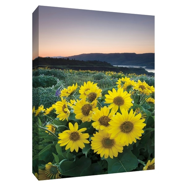 """PTM Images 9-154693 PTM Canvas Collection 10"""" x 8"""" - """"Balsamroot"""" Giclee Flowers Art Print on Canvas"""