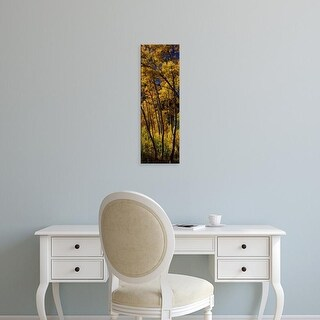 Easy Art Prints Panoramic Images's 'Aspen trees in autumn, Colorado, USA' Premium Canvas Art