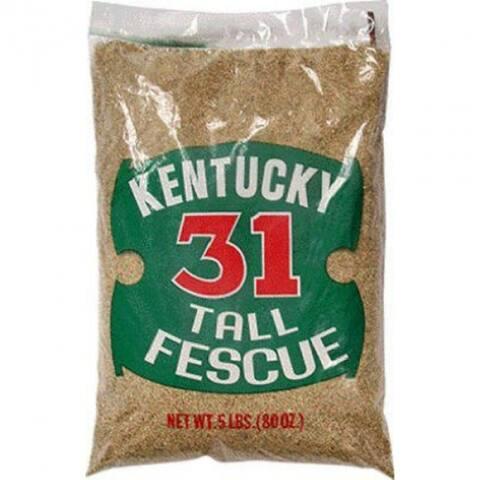 Barenbrug 16205 Kentucky-31 Tall Fescue Grass Seed, 5 Lbs