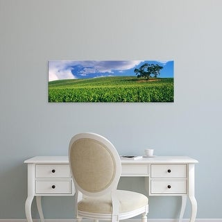 Easy Art Prints Panoramic Images's 'View of a vineyard, Paso Robles, San Luis Obispo County, California' Canvas Art