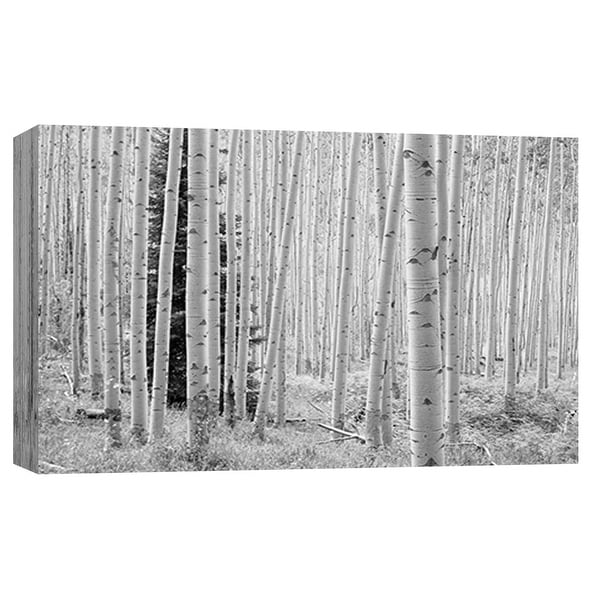 "PTM Images 9-101944 PTM Canvas Collection 8"" x 10"" - ""Aspen Black and White 1"" Giclee Forests Art Print on Canvas"