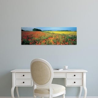 Easy Art Prints Panoramic Images's 'Flowers in a field, Bath, England' Premium Canvas Art