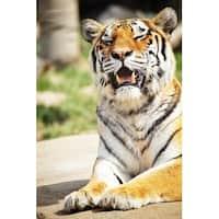 Tiger Portrait Photograph Wall Art Canvas