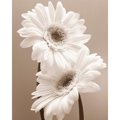 ''Two Daisies'' by Carol Sharp Floral Art Print (11.75 x 9.5 in.)