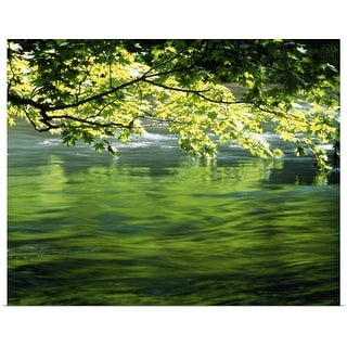 """Tree branch hanging over a lake"" Poster Print"
