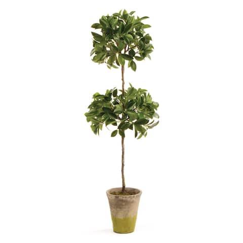 "Ficus Topiary In Pot 31"""