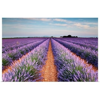 """""""Lavender field in blossom, France."""" Poster Print"""