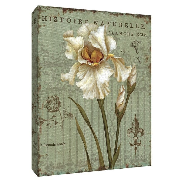 """PTM Images 9-154560 PTM Canvas Collection 10"""" x 8"""" - """"Histoire Naturelle II"""" Giclee Flowers Art Print on Canvas"""
