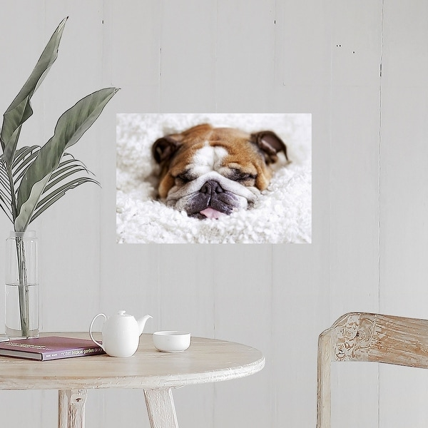 Black And White Cute British Bulldog Poster Pictures Room Decoration Gloss Paper