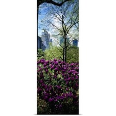 Poster Print entitled Close-up of plants, Central Park, Manhattan, New York City, New York State