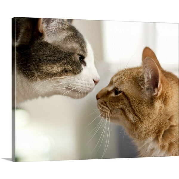 """Gray and white tabby cat and an orange ginger cat nose to nose"" Canvas Wall Art"