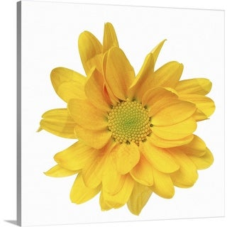 """Close-up of a chrysanthemum"" Canvas Wall Art"