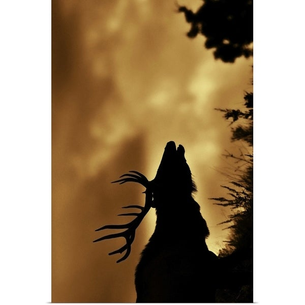 """""""Moose in silhouette with copper colored sunrise. Yellowstone national park."""" Poster Print"""