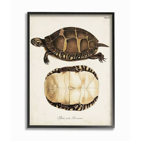 Stupell Industries Painted Turtle Shell Latin Scientific Animal Study Framed Wall Art - Brown