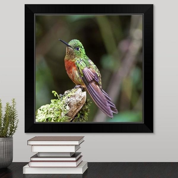 """""""Square photograph displaying montane hummingbird taken in Ecuador."""" Black Framed Print"""