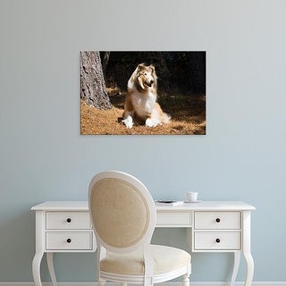 Easy Art Prints Zandria Muench Beraldo's 'Collie Sitting In The Sun' Premium Canvas Art