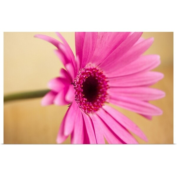 """Pink Gerber flower"" Poster Print"