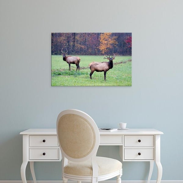 Easy Art Prints Joanne Wells's 'Elk In The Great Smoky Mountains' Premium Canvas Art