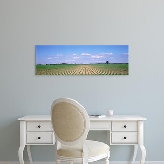 Easy Art Prints Panoramic Images's 'Soybean field in a landscape, Marion County, Illinois, USA' Premium Canvas Art