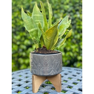 """Link to Mid-Century 5"""" Pinwheel Ceramic Planter on Wood Stand,Glass Charcoal Similar Items in Planters, Hangers & Stands"""