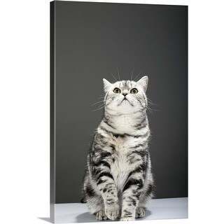 """""""Cat looking up"""" Canvas Wall Art"""