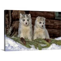 Premium Thick-Wrap Canvas entitled Two Siberian Husky puppies in the snow - Multi-color