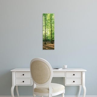 Easy Art Prints Panoramic Images's 'Trees in a forest, Germany' Premium Canvas Art