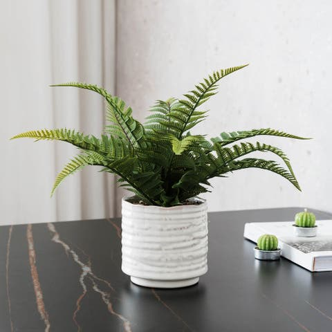 Dynamic Fern In Ceramic Pot