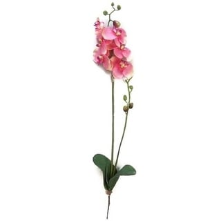 Admired by Nature GPL951-CM-BT Artificial Orchid Phalaenopsis Spray Cream - Velvet - 3 x 31 in.