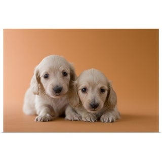 """""""Two Dachshund Puppies, Japan"""" Poster Print"""
