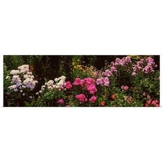 """Flowers in a garden, California"" Poster Print"