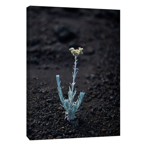 "PTM Images 9-108355 PTM Canvas Collection 10"" x 8"" - ""Hawaii Flower C"" Giclee Flowers Art Print on Canvas"