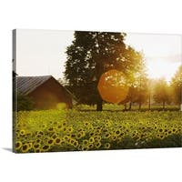 Premium Thick-Wrap Canvas entitled Sunflower Field At Sunset With A Barn - Multi-color