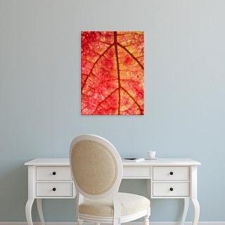 Easy Art Prints Rob Sheppard's 'Grape Leaf In Fall' Premium Canvas Art