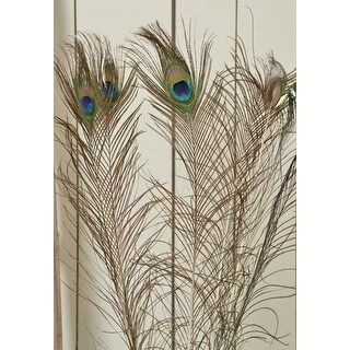 Peacock Feathers SHORT STALK per 25