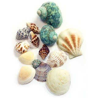 Sea Shells 4.3oz-Mixed - mixed
