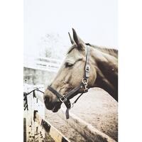 Brown Horse Portrait Canvas Wall Art Photograph