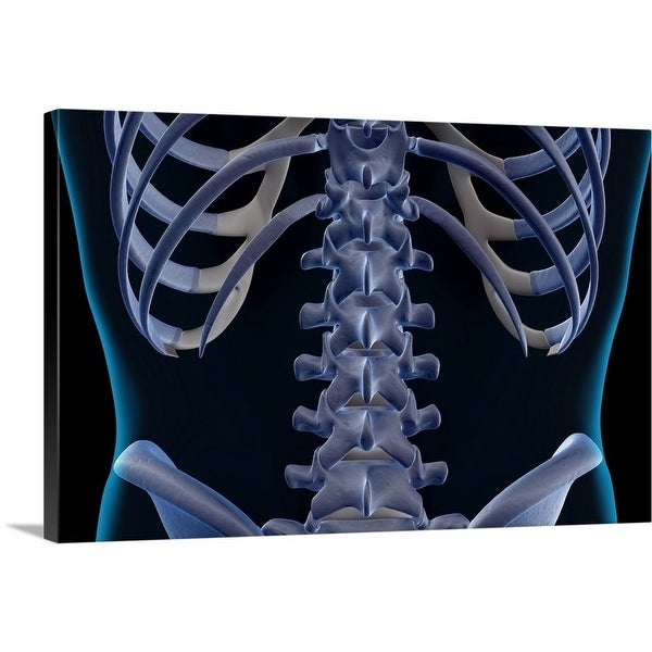 Shop Premium Thick Wrap Canvas Entitled The Bones Of The Lower Back