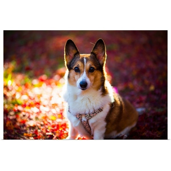 """Pembroke Welsh Corgi on a day of autumn"" Poster Print"